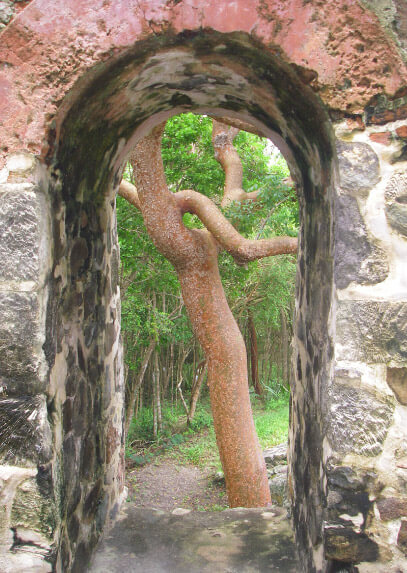 Looking through old St John stone ruin arch to crooked tree